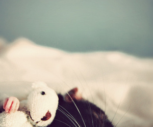cute, rat, and animal image
