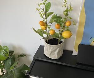 aesthetic, lemon, and cottage image
