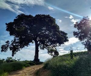 farm, inspiration, and nature image