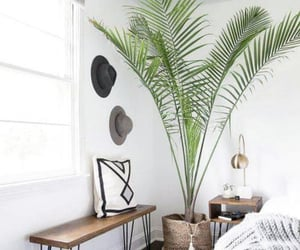 bedroom, plants, and inspiration image