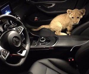 car, luxury, and animal image