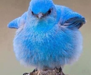 blue bird, happiness, and cute image