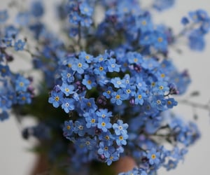 flowers, forget me not, and little flowers image