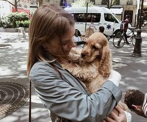 animals, city, and dog image