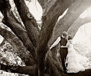tree, black and white, and wedding image