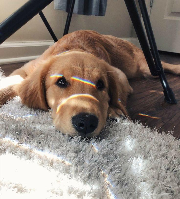 article, basement, and dog image