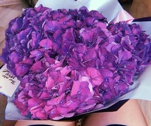 beauty, flower, and hydrangeas image