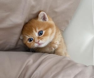 adorable, baby animals, and kittens image