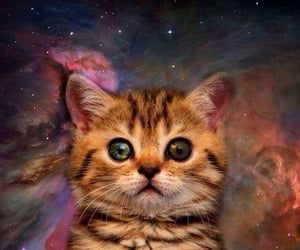 cat, space cat, and cute image