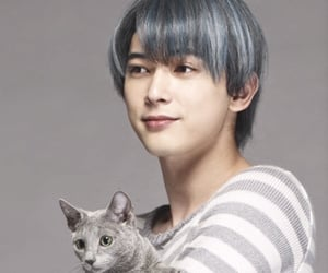 cat, ryo yoshizawa, and 猫 image