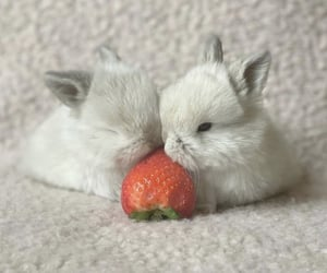 animal, bunny, and cutie image