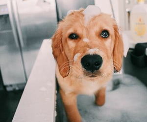 adorable, dog, and home image