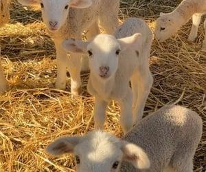 animal, cute, and farm image