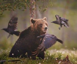 bear, photography, and crow image