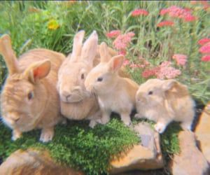 bunny, rabbit, and animal image