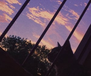 aesthetic, cat, and clouds image