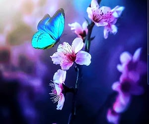 animals, butterflies, and butterfly image