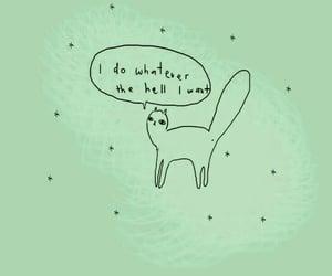 Algeria, cat, and motivation image