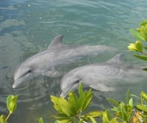 dolphin, animal, and theme image