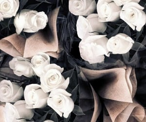 flowers, weheartit, and white roses image