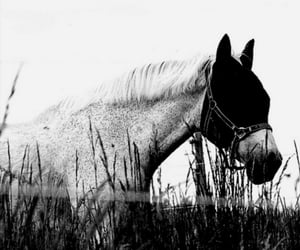 fotografie, photography, and blackandwhite image