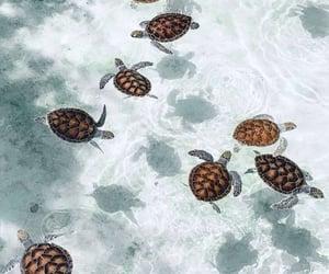 turtles, animal, and beach image