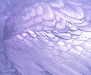aesthetic, wings, and white image