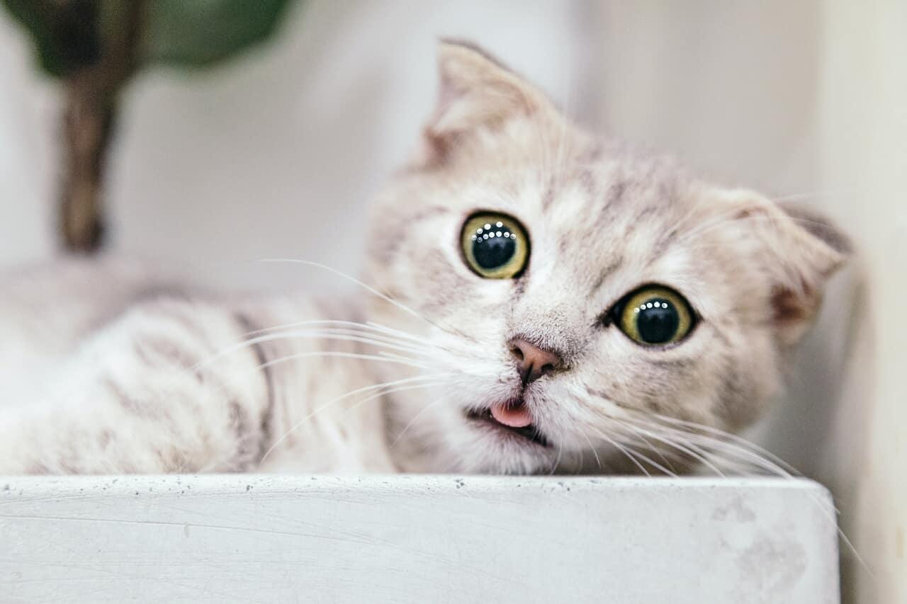 kitten, animals, and feline image