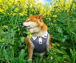 cute dog, soft, and cute image