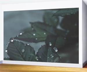 botanical, walldecor, and homedecor image