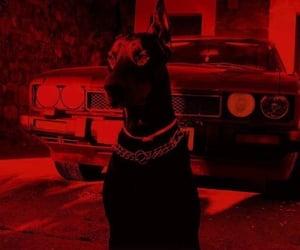dog, car, and black image