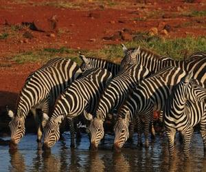 Animales, naturaleza, and cebras image