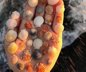 summer, sea, and shells image