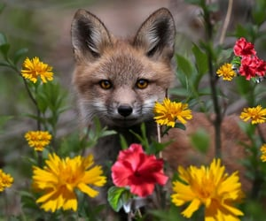 animals, beautiful, and flowers image