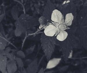 black and white, preto e branco, and flor image