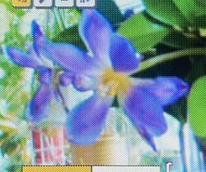 aesthetic, digital, and flowers image