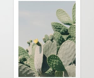 art print, cactus, and photography image