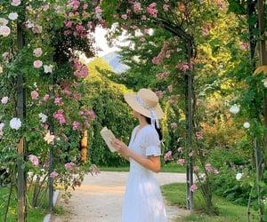 camellia.dreamer