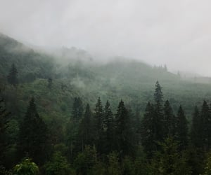 beautiful, fog, and forest image