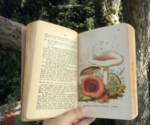 aesthetic, book, and mushroom image