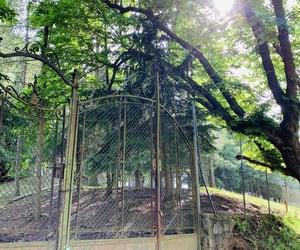 beautiful, gate, and nature image