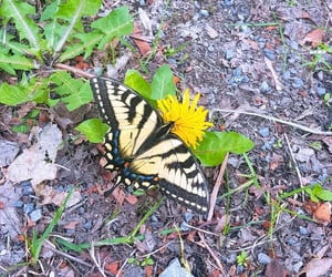 butterfly, Jaune, and beautiful image