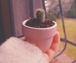 cactus, cosy, and flower image