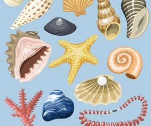 shells image