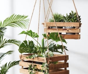plants, diy, and green image