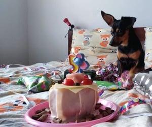 5, animal, and cake image