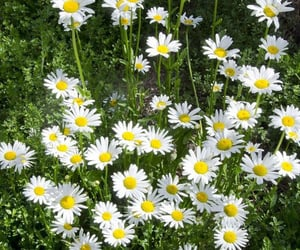 bright, carefree, and daisy image