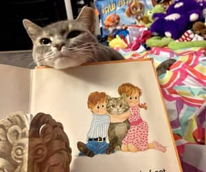 adopt don't shop, storybook cat, and your very own image