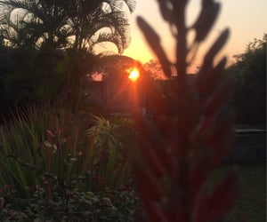 amazing, green, and sunset image