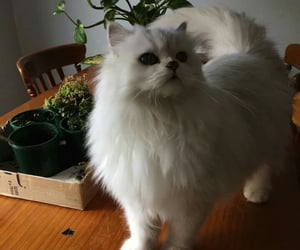 cat, sweety, and caty image